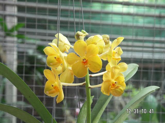 Smiling_flower