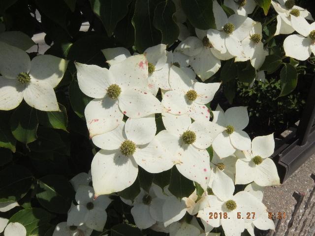 Dscf2594